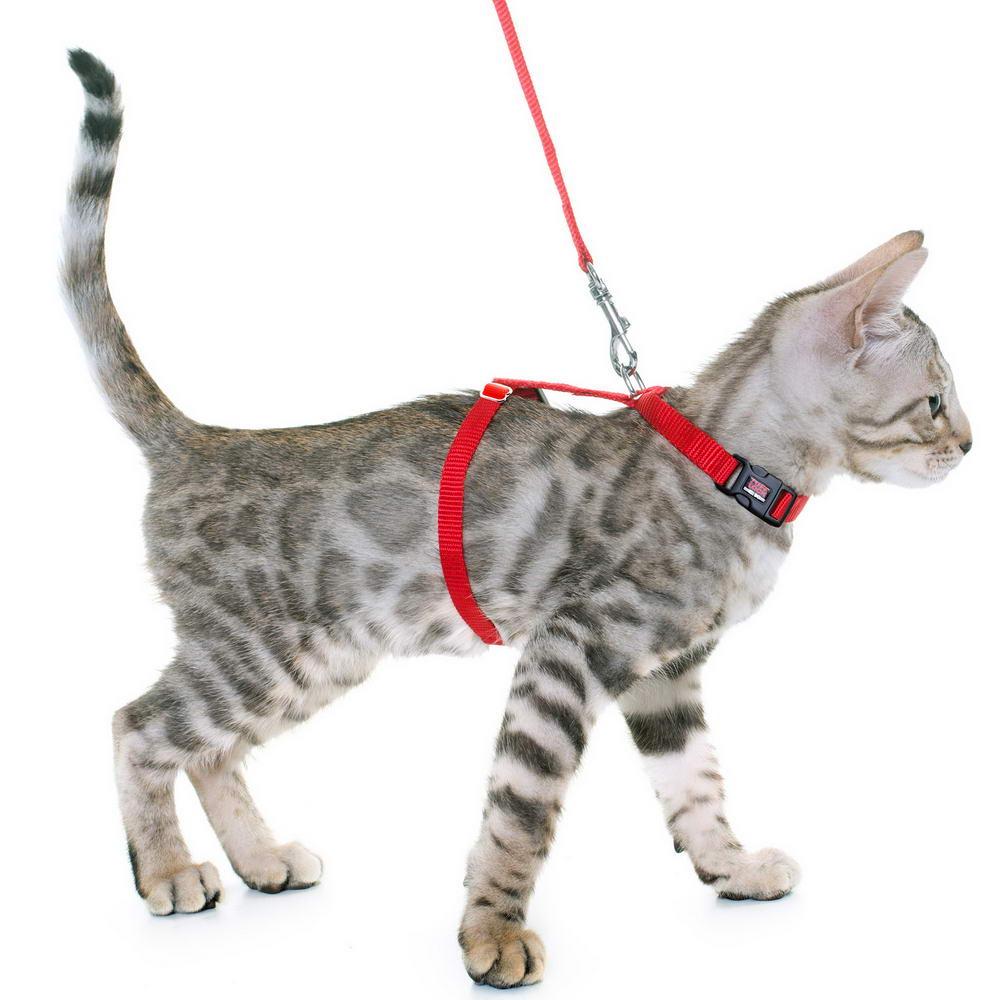Premium Tuff Lock Cat Harness silver-bengal-kitten-_resize
